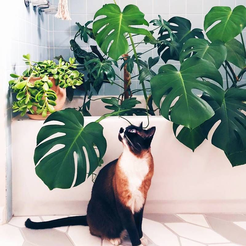 These 11 Indoor Plants Are Safe For Pets And Will Spruce Up Your Space Indoor Plants Pet Friendly Cat Plants Hanging Plants Indoor