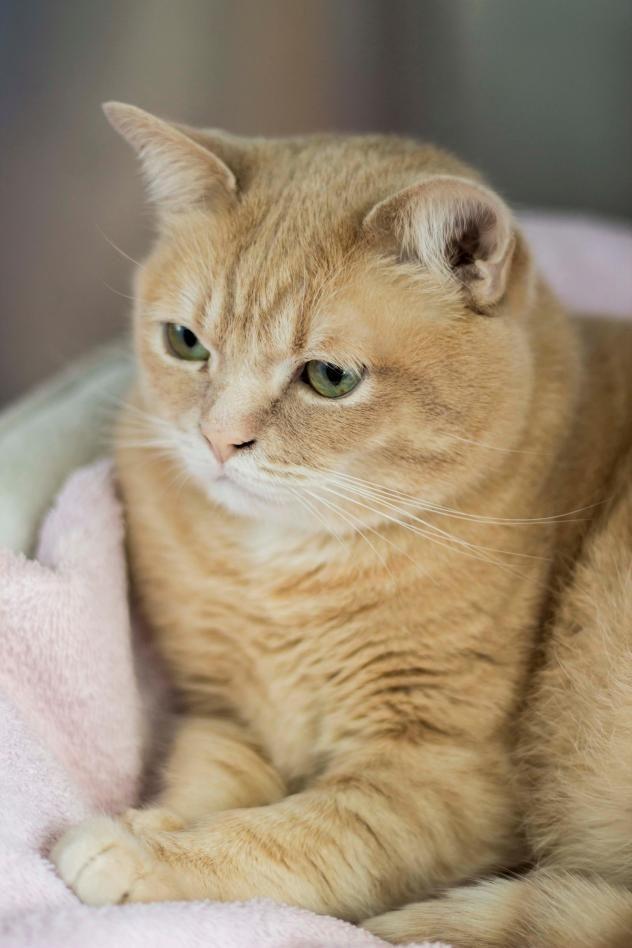 Toronto Humane Society Pet Adoption Animal Shelter Cat Adoption