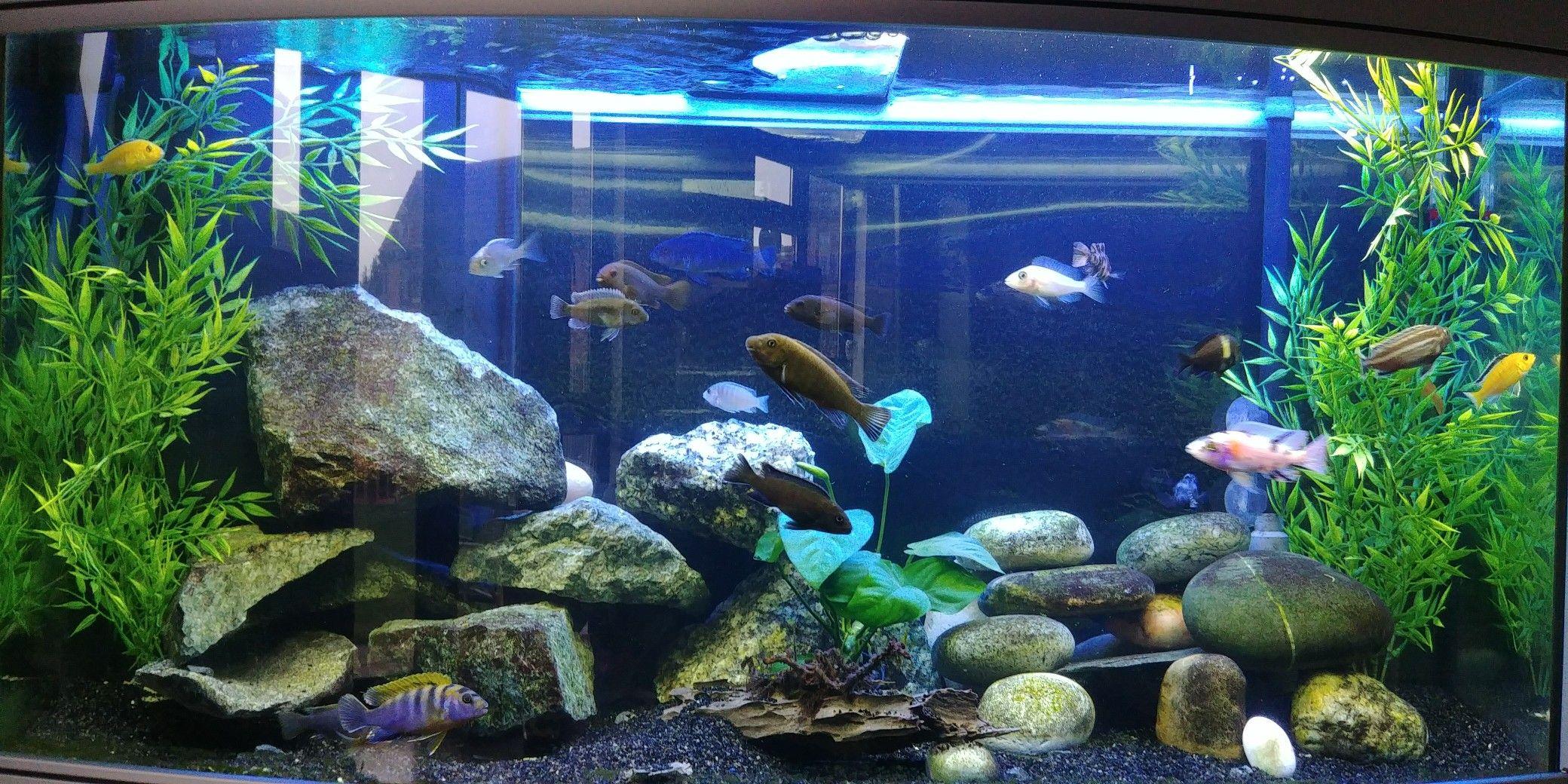 c5b1a1006a77fbe84d51b32a8ac075b8 Luxe De Crevette Aquarium Des Idées