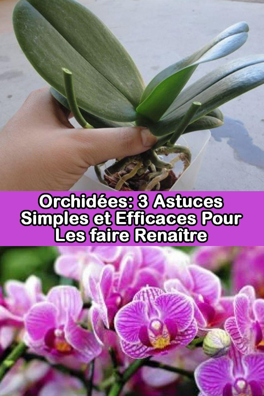 Orchidees 3 Astuces Simples Et Efficaces Pour Les Faire Renaitre