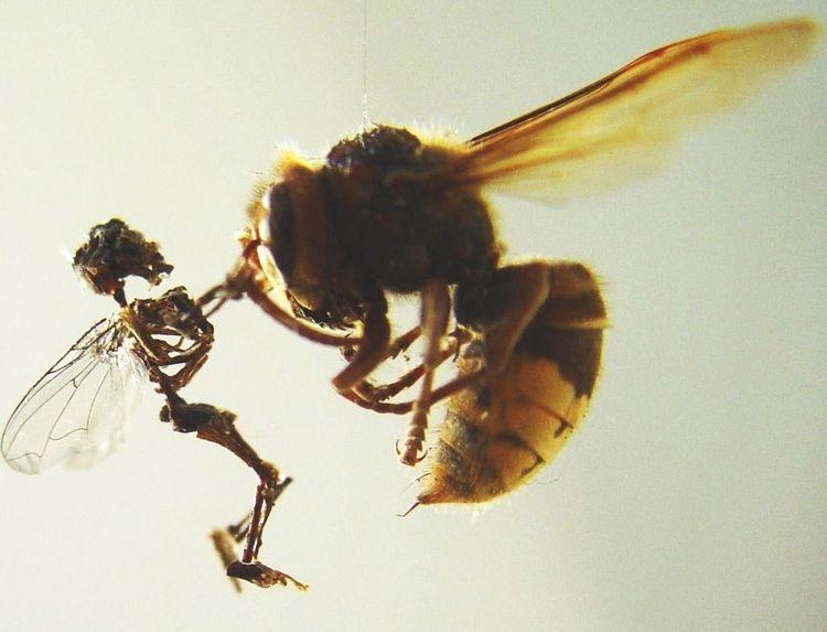 Swarm (detail - fairy versus hornet).JPG