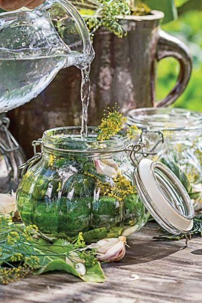 Dla ogrodników ogórkowy sezon to nie laba, lecz czas zbierania, kiszenia i…