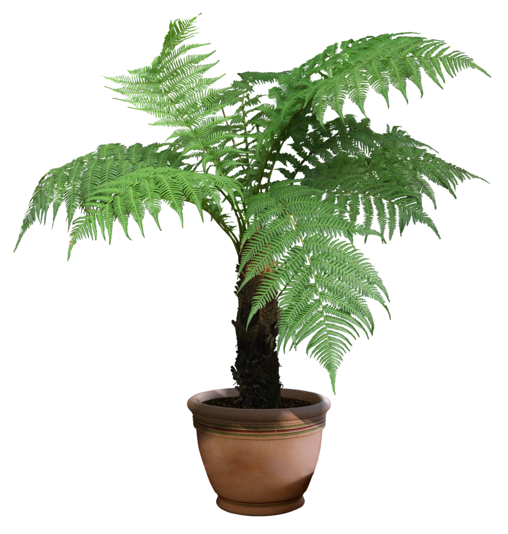 plant_png_7_by_digitalwideresource-d671kwk.png (1024×1078 ...