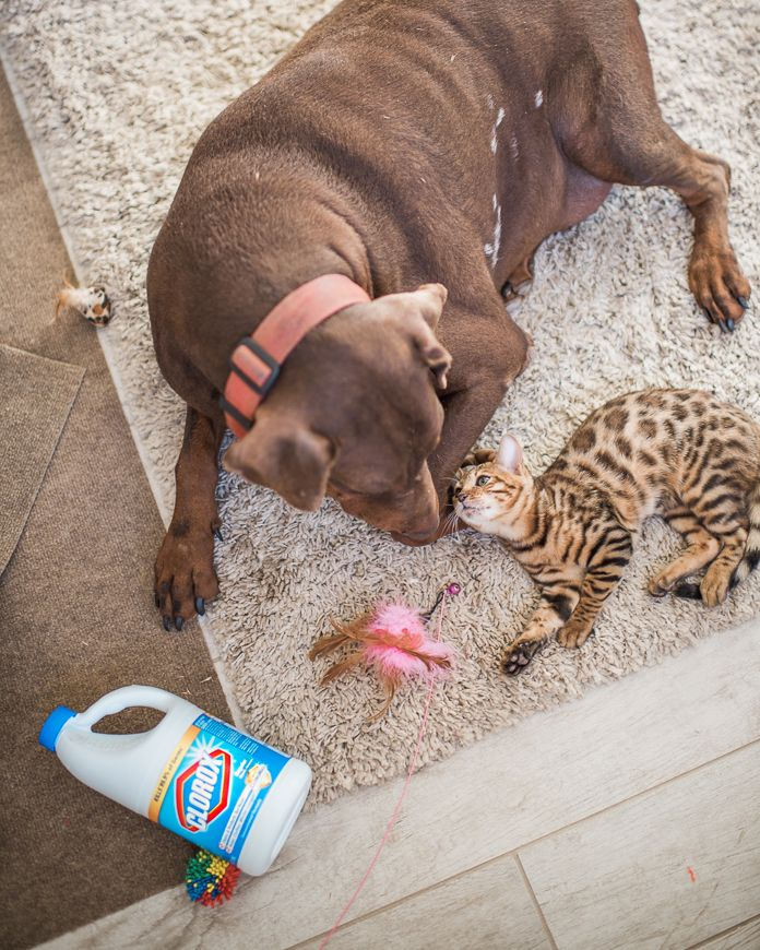 Getting Rid of Parvo after your Dog gets Sick Funny