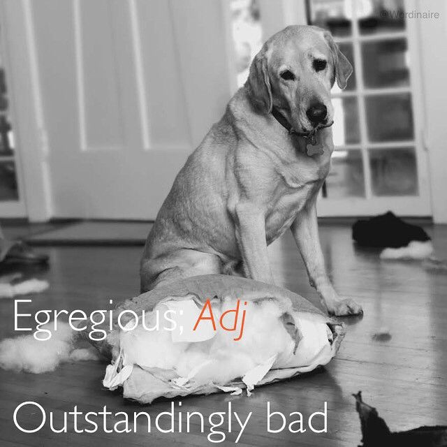 Egregious Behavior