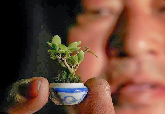 World S Smallest Bonsai Tree Bonsai Tree Bonsai Mini Bonsai