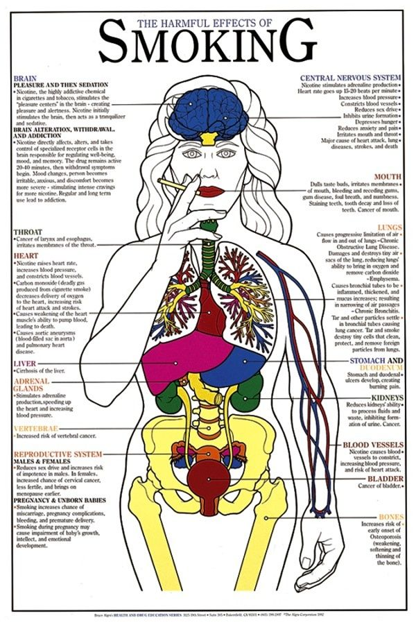 Effects of smoking harmful laminated chart anatomystuff also dangers poster inspirational rh pinterest