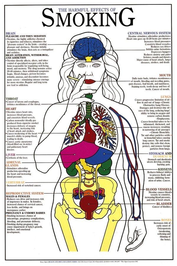 dangers of smoking chart    poster
