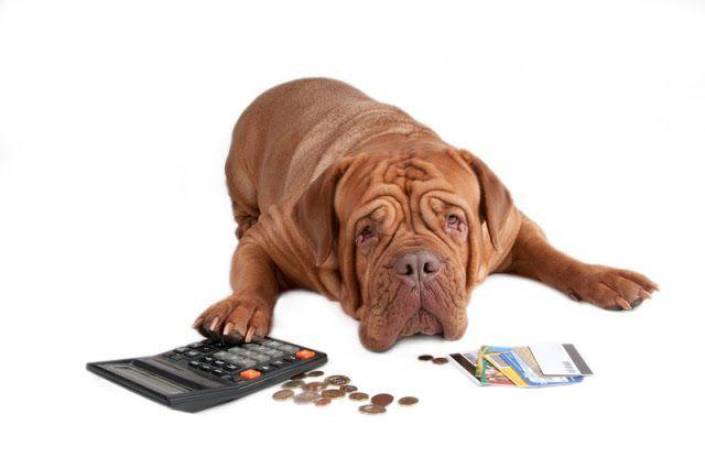 Price Increases Pet Insurance Faq S Pet Insurance Cost Pet Insurance Cheap Pet Insurance