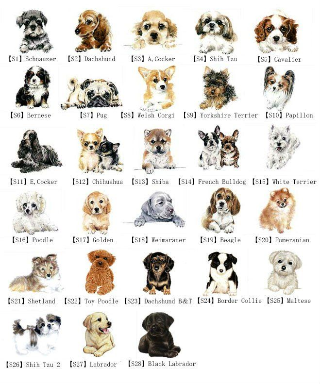 Classification of Domestic Dog | learn fun smart crossbreed suitable ...