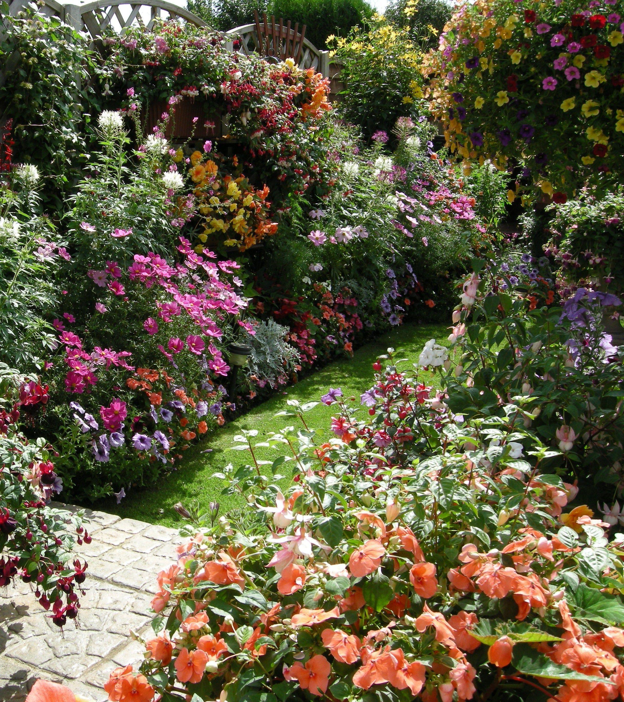 это дневные мой сад фотографии руслан обратился медикам