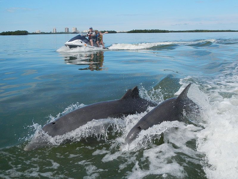 Dolphin tour with images dolphin tours