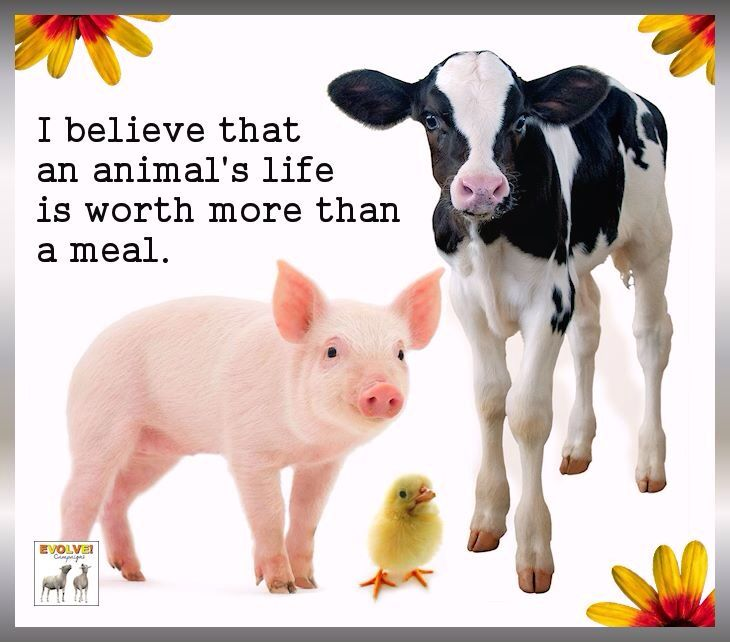 Slogans For Saving Animals – Quotes of the Day