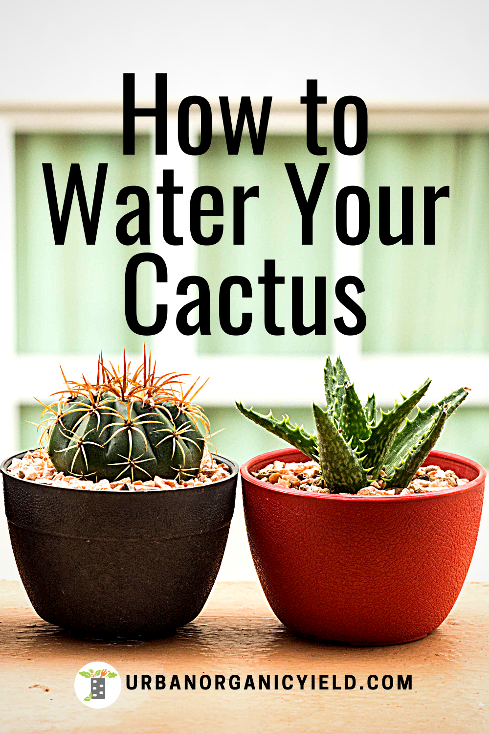 How Often To Water Cactus Indoors (Tips To Keep Them Alive