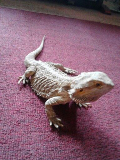 Blade the rescued dragon