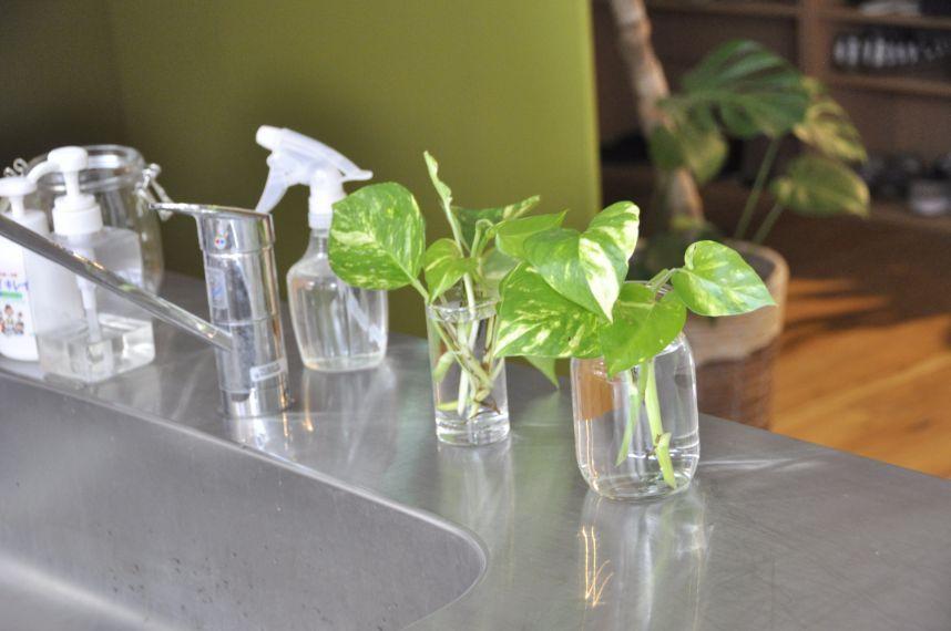 キッチンにゆとりを ポトスで叶える癒しの空間づくり 画像あり