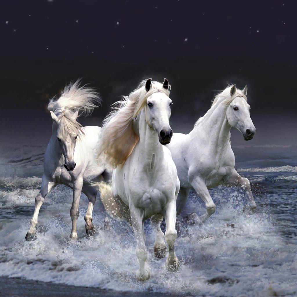 Pin By Rosemary Harrod On Horses Horse Wallpaper Horses White Horses