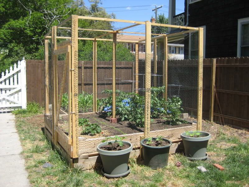 Nice small raised beds 24 deep surrounded with - How to protect vegetable garden from animals ...