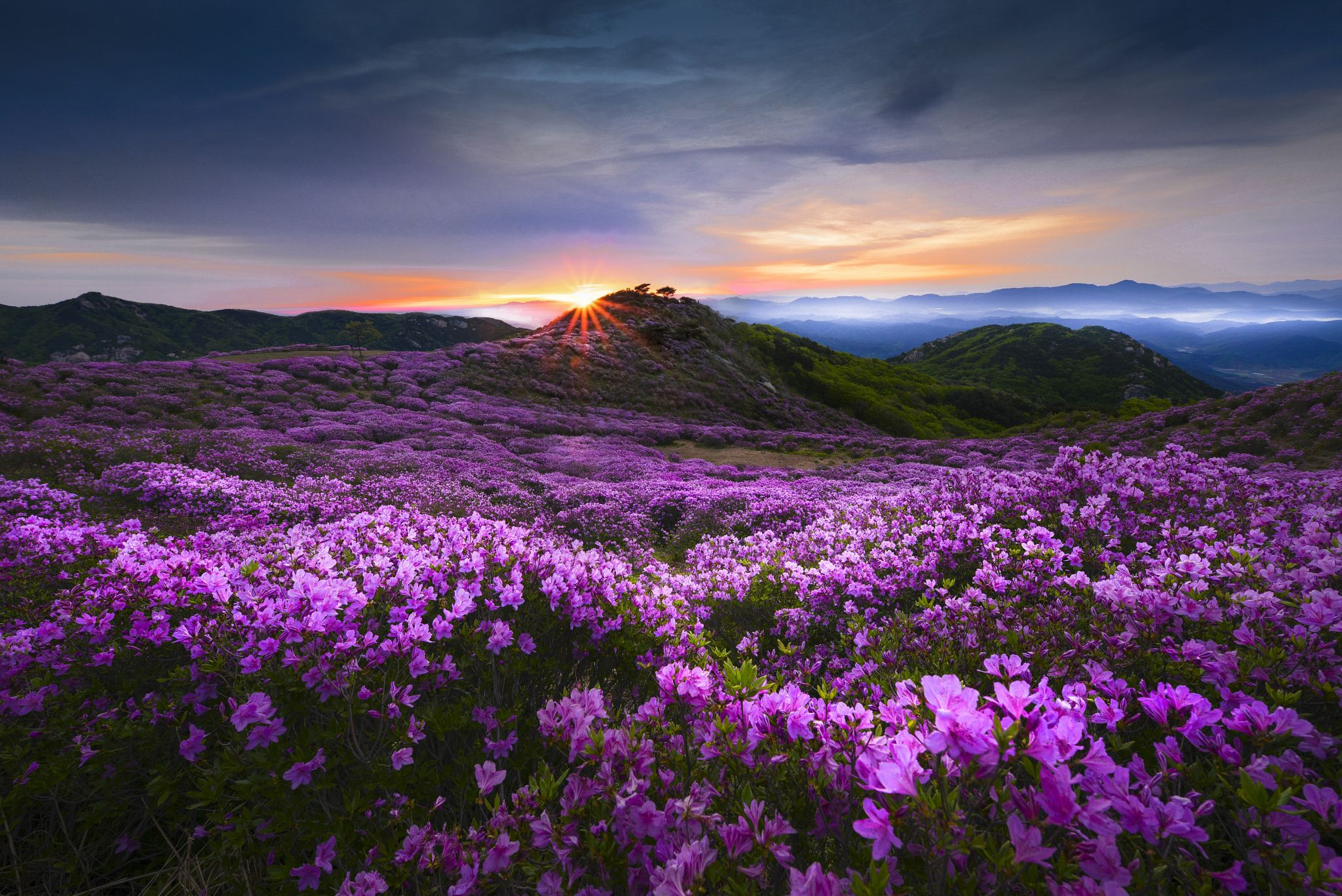 Flower Valley of the morning - null | jae youn , Ryu ...