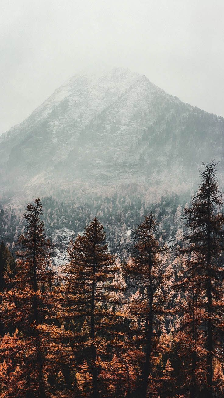 8 Free Autumn Inspired Iphone 7 Plus Wallpapers Winter