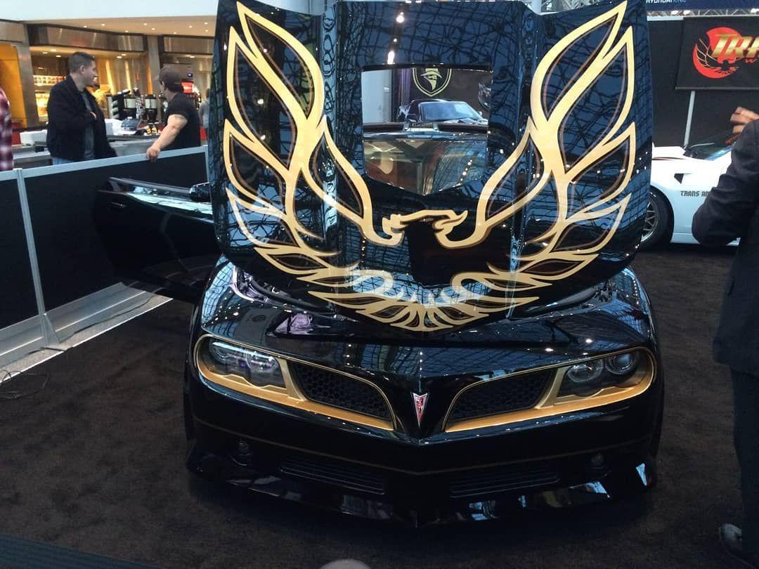 Bird At New York City Car Show Window Tinting Taunton Somerset