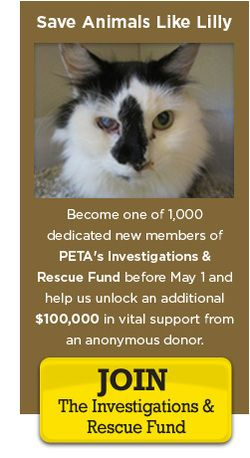 PETA update