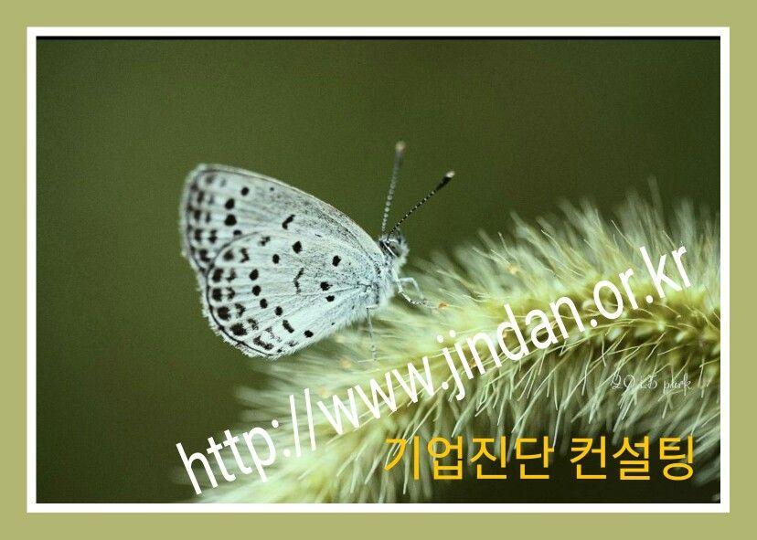 기업진단 우리경영지도원 경영지도사