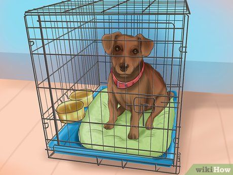 Image Titled Crate Train Your Dog Or Puppy Step 17 Puppy Training