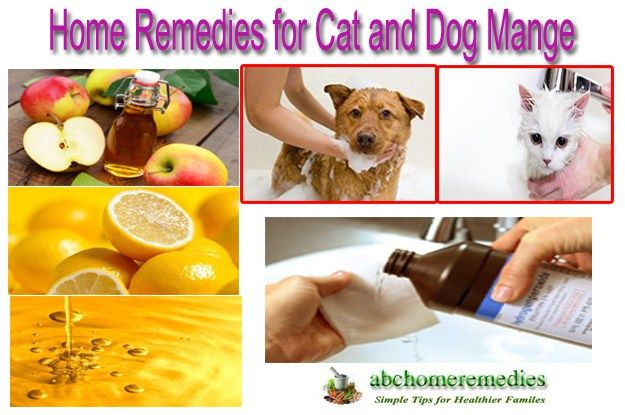 10 Superb Home Remedies For Cat And Dog Mange Dog Mange Cat