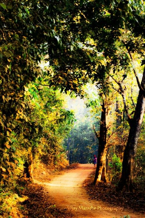 Pleasant Morning Of An Indian Village Village Photography Landscape Photography Landscape Artist