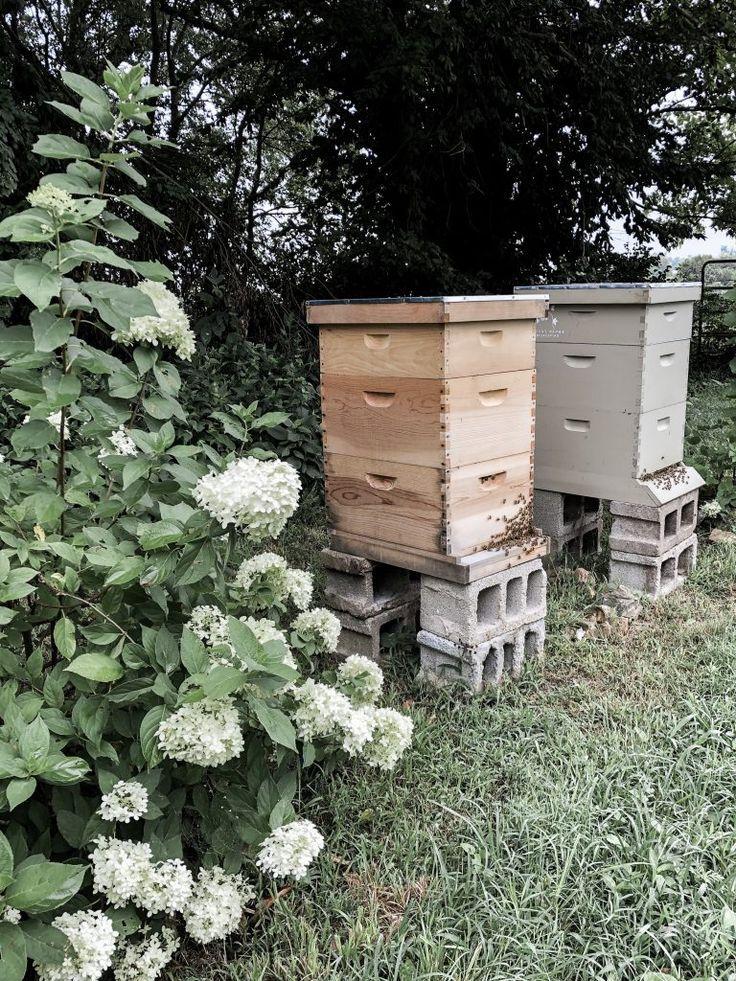 Backyard Beekeeping for Beginners | Backyard beekeeping ...