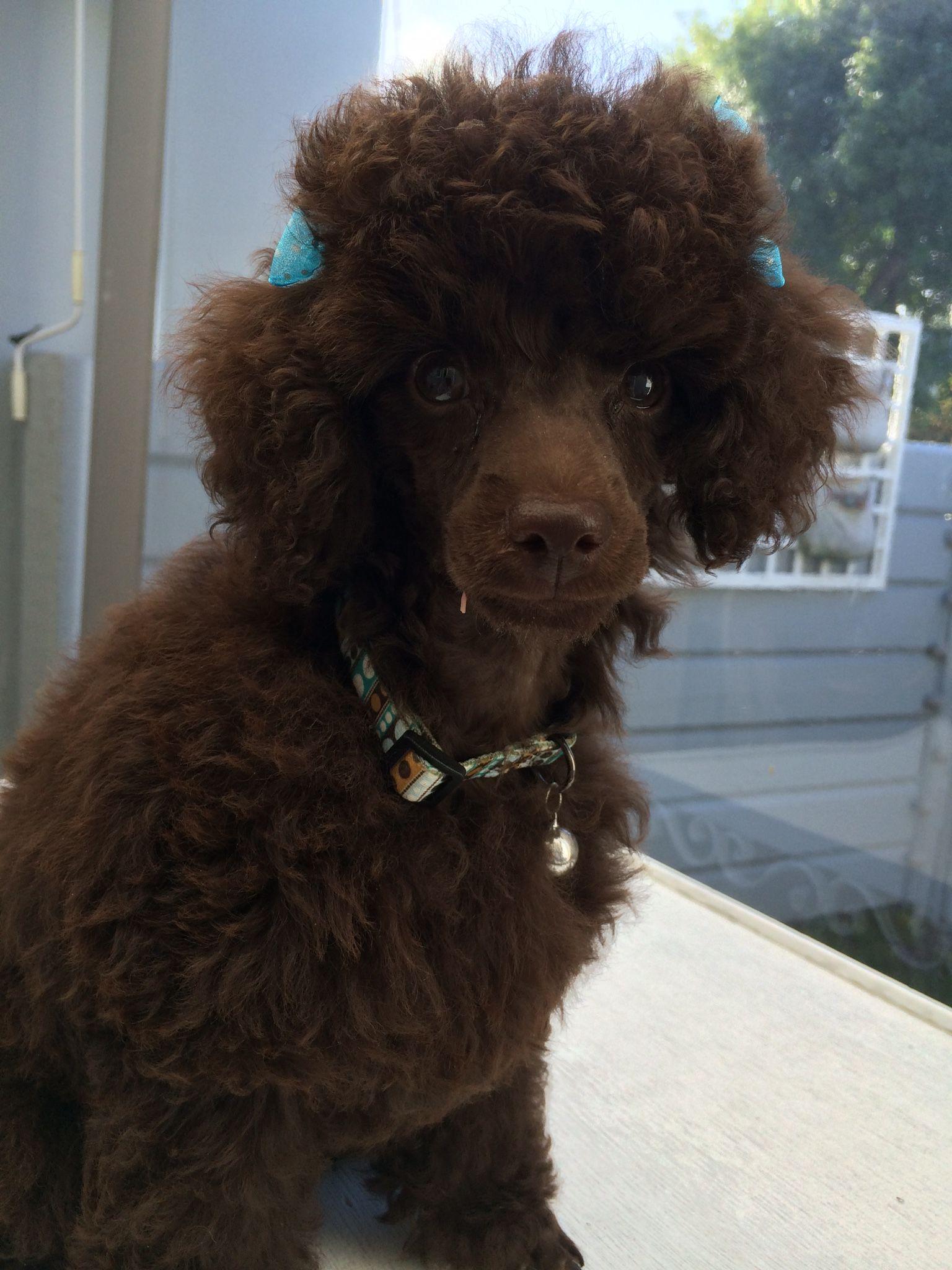 Craigslist Seattle Pets For Sale