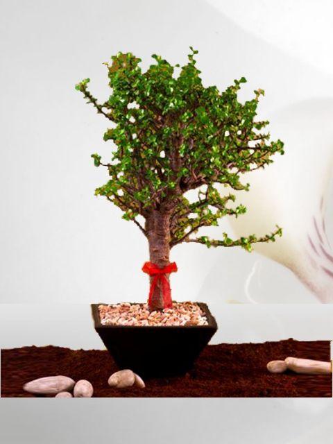 Venta de plantas plantas de ornato venta de plantas de for 10 plantas de ornato