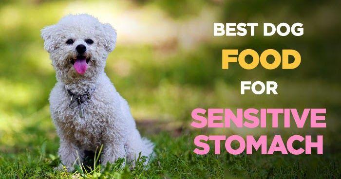 Ibs dog food sensitive belly dog food allergy pooch dog food ibs dog food sensitive belly dog food allergy pooch dog food recipe forumfinder Images