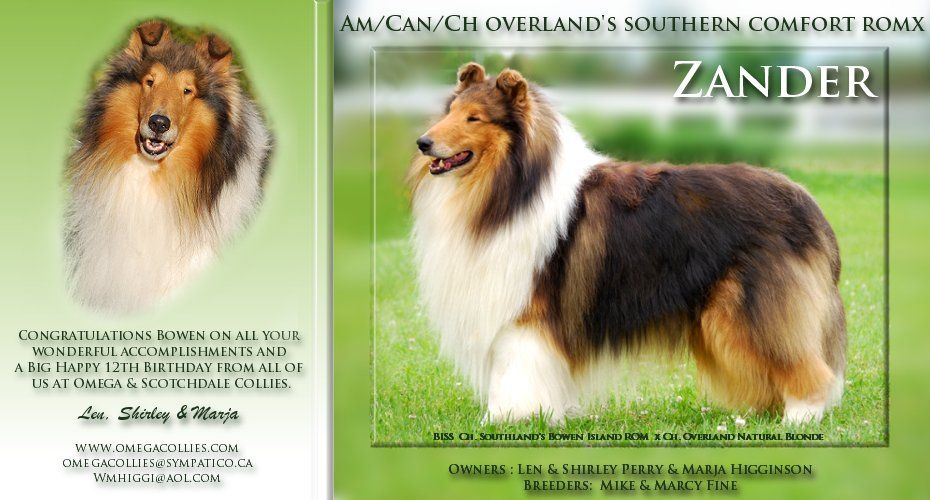 Am Can Ch Overland S Southern Comfort Romx Collie Rough Collie