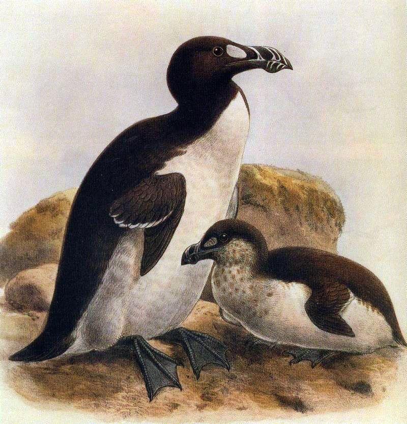 Neal Warnock (NealWarnock) Twitter Extinct animals