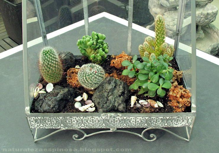 arreglo cactus
