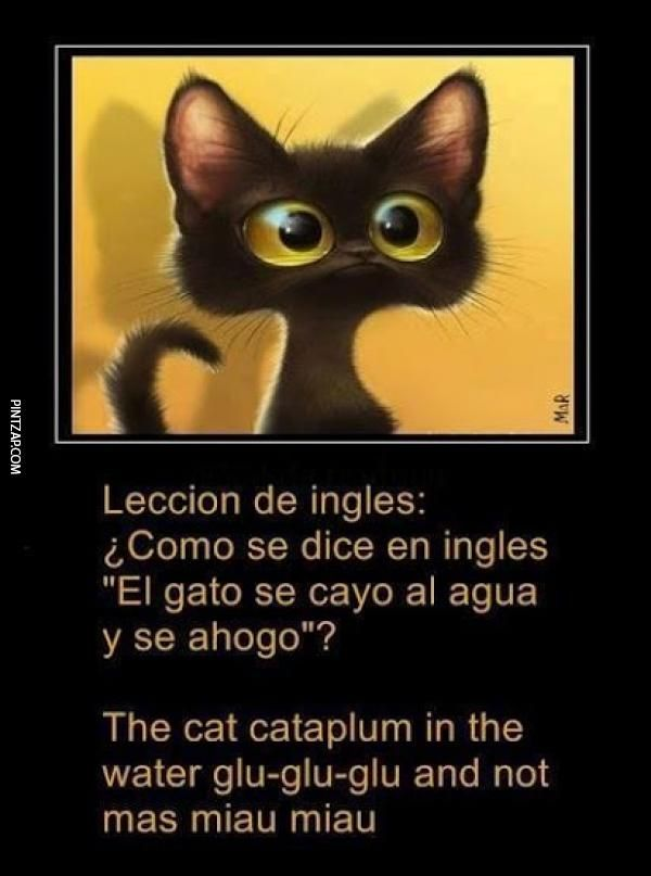 Photo of Como se dice en inglés, ¿el gato cayó al agua y se ahogó?