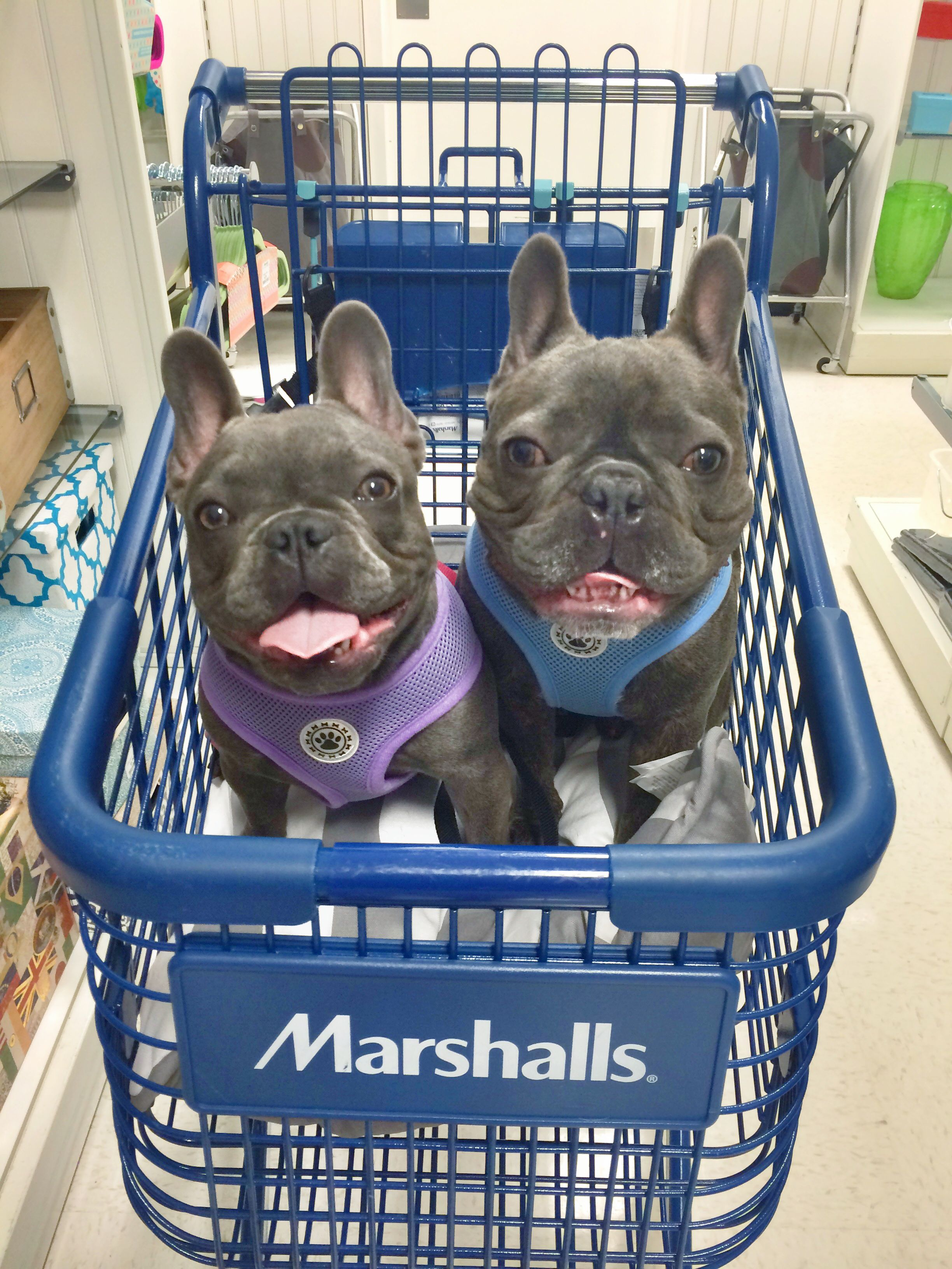 34 stores that dont ask you to leave your dog outside