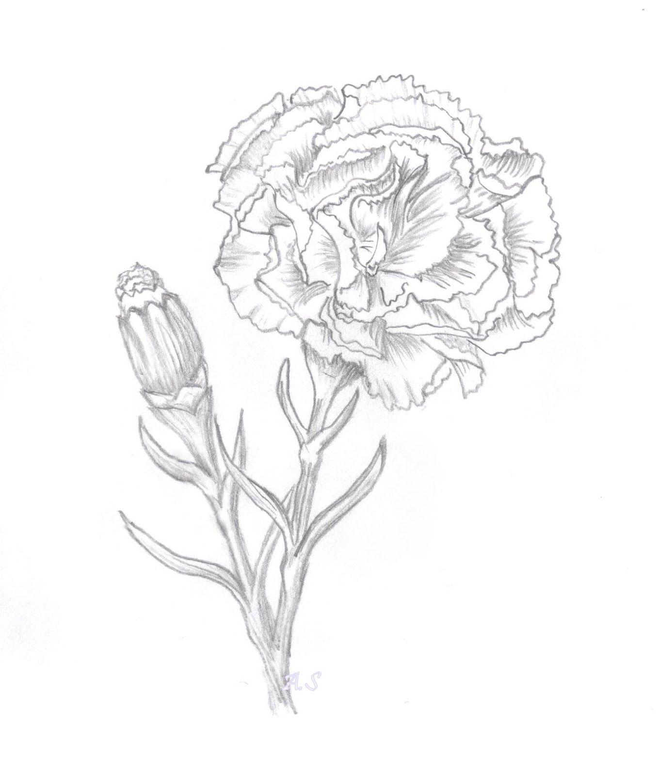 Carnation Digi Sketch Flower Sketches Carnation Tattoo Carnation Flower Tattoo