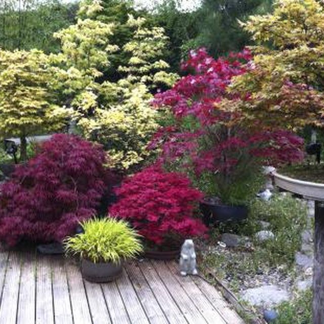 Genial An Array Of Plants Creating Privacy Around A Patio Deck. Tall Plants, Potted  Plants