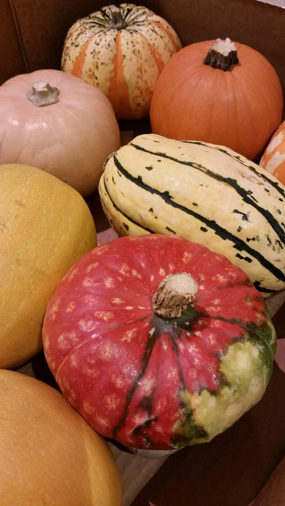 Beautiful coloured pumpkins perfect for autumn decor.