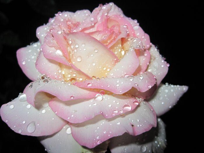 Blumen (58) (700x525, 316Kb)