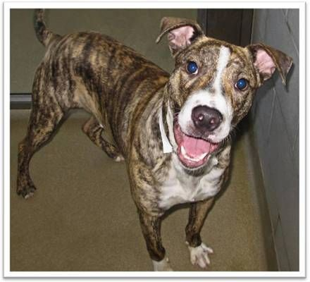 Benji Is A Year Old Catahoula Mix He Has Never Met A Stranger And