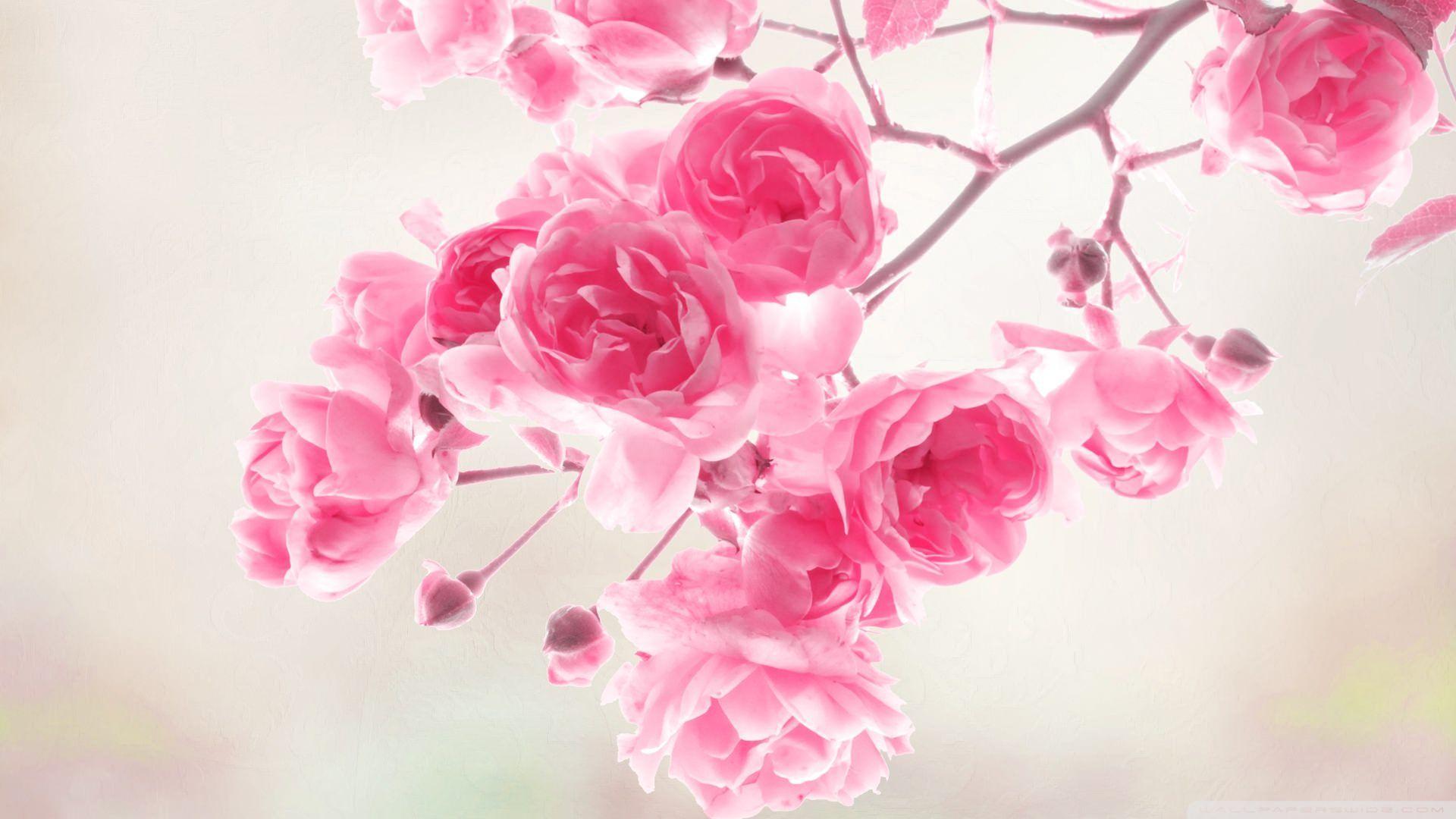 Top 46 beautiful pink flowers for your garden beautiful pink top 46 beautiful pink flowers for your garden mightylinksfo