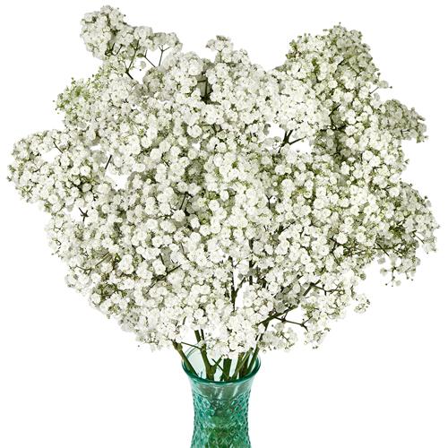 Cotton Cloud Baby S Breath Fiftyflowers Com Babys Breath Flower Centerpieces Wedding Babys Breath Centerpiece