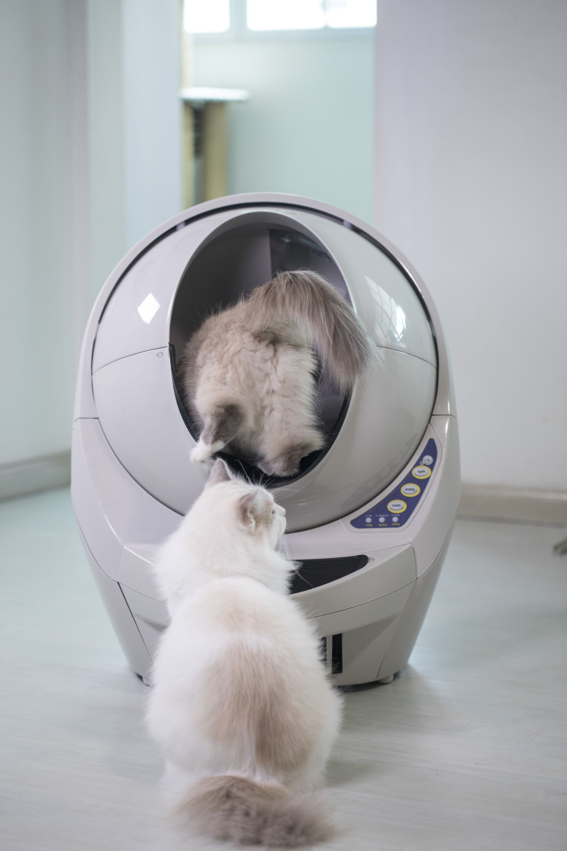 Going in! litterrobot cats pettech Litter robot