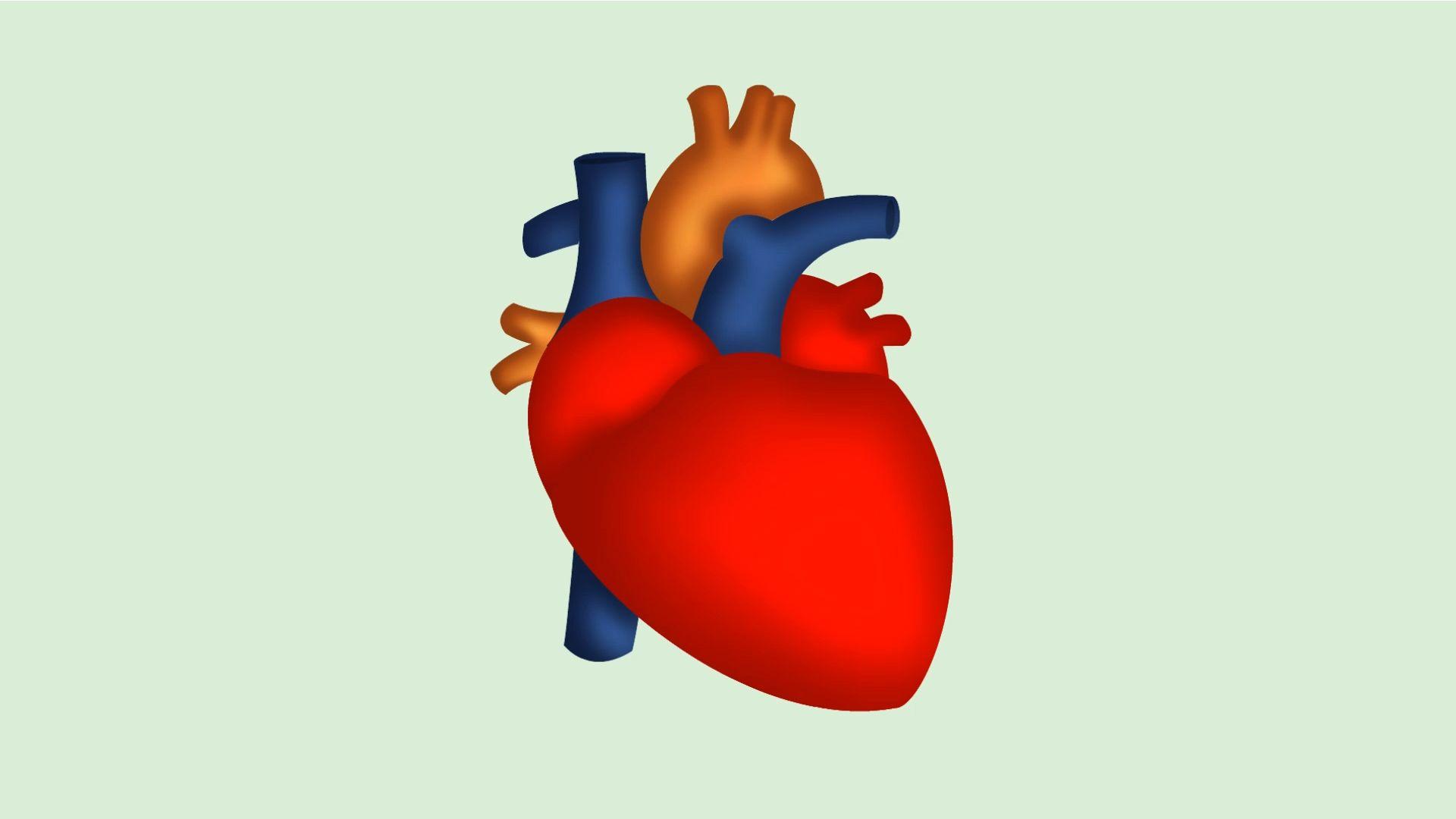 Draw A Human Heart