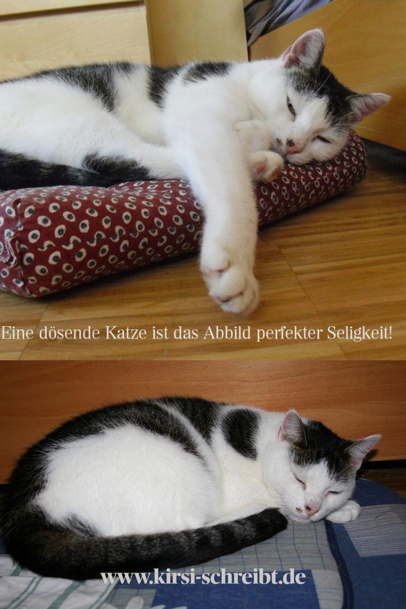 Katzenzitat Katzen Zitate Tiere