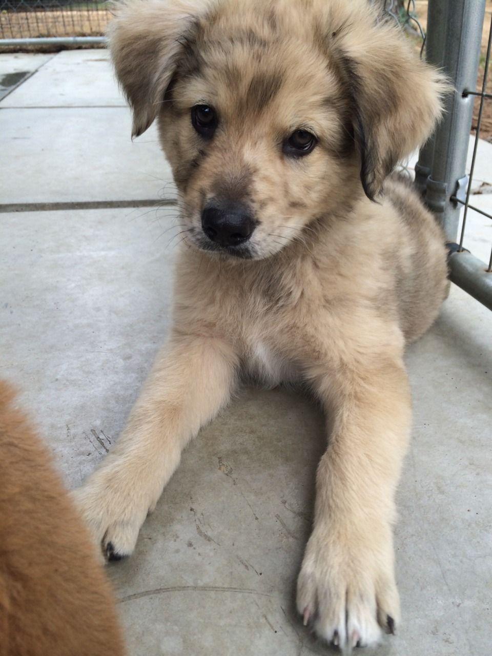 Puppies Galore Puppies Cute Animals Animals